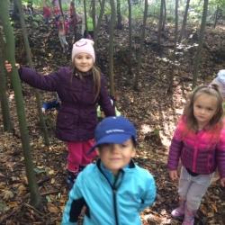 Lesní procházka
